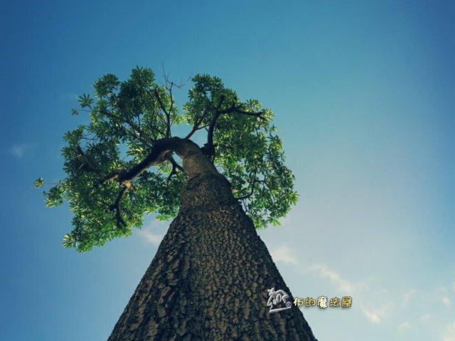 170521-路上.一棵樹.PhotoGrid_14960490368461